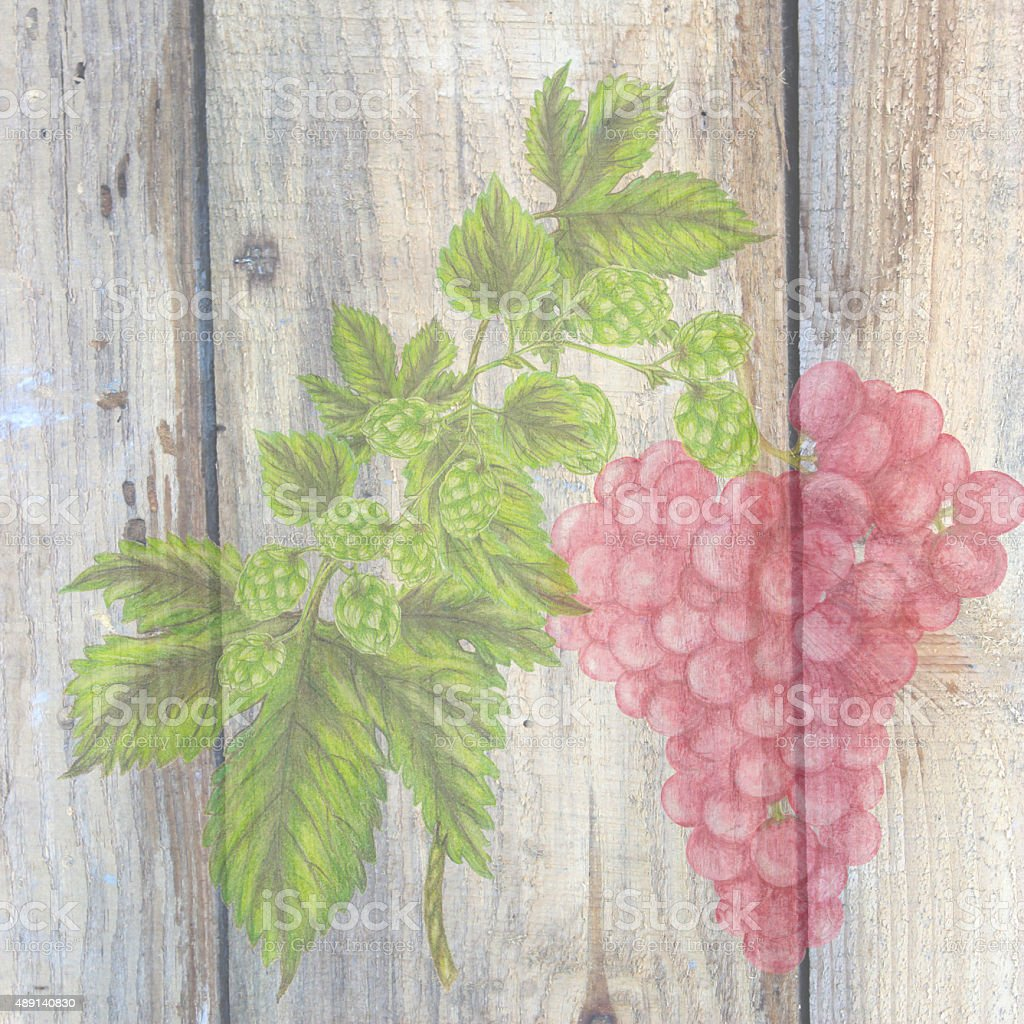 Grape and hops vector art illustration