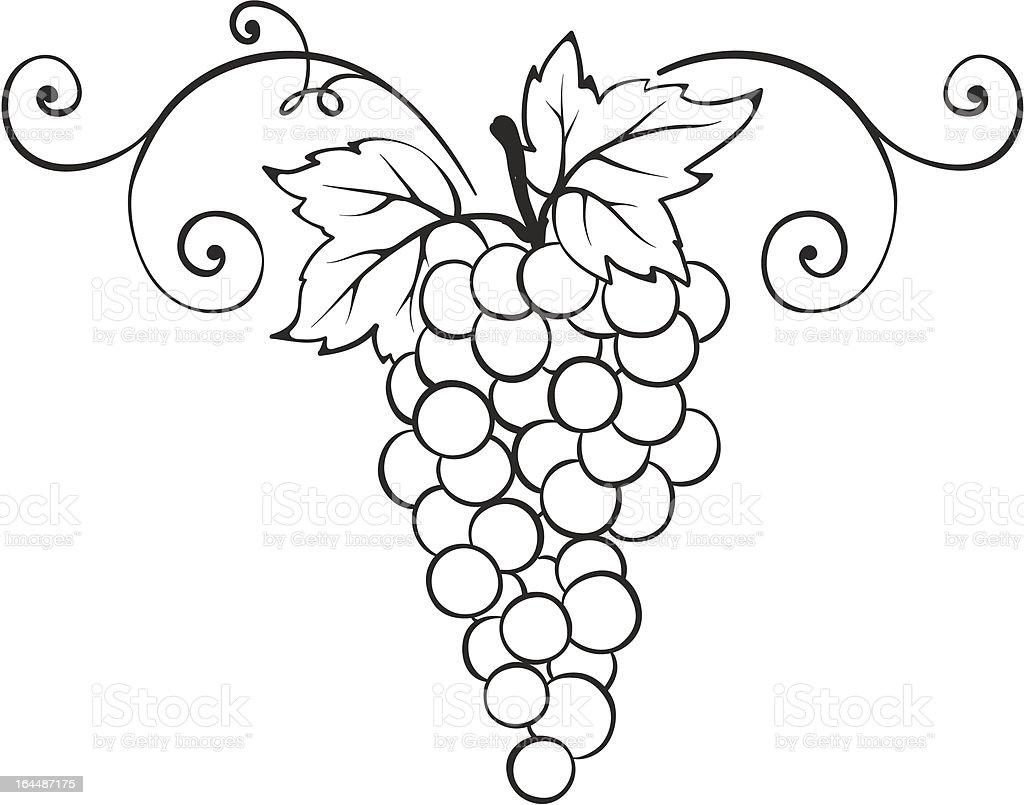 Grape -- decorative element vector art illustration