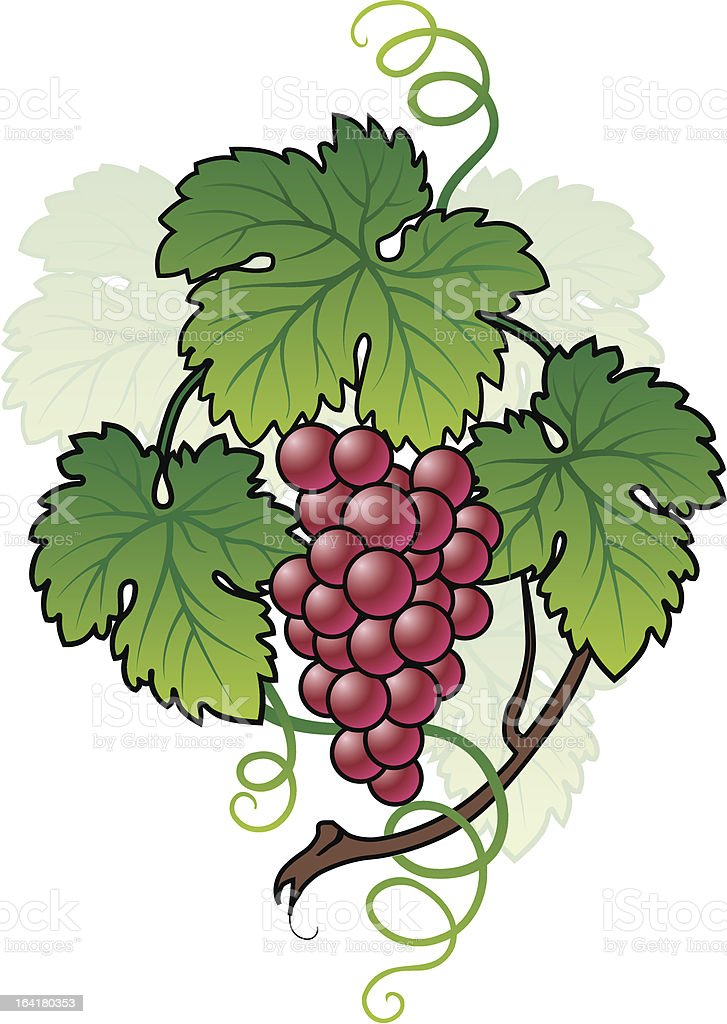 Grape with leafs royalty-free stock vector art