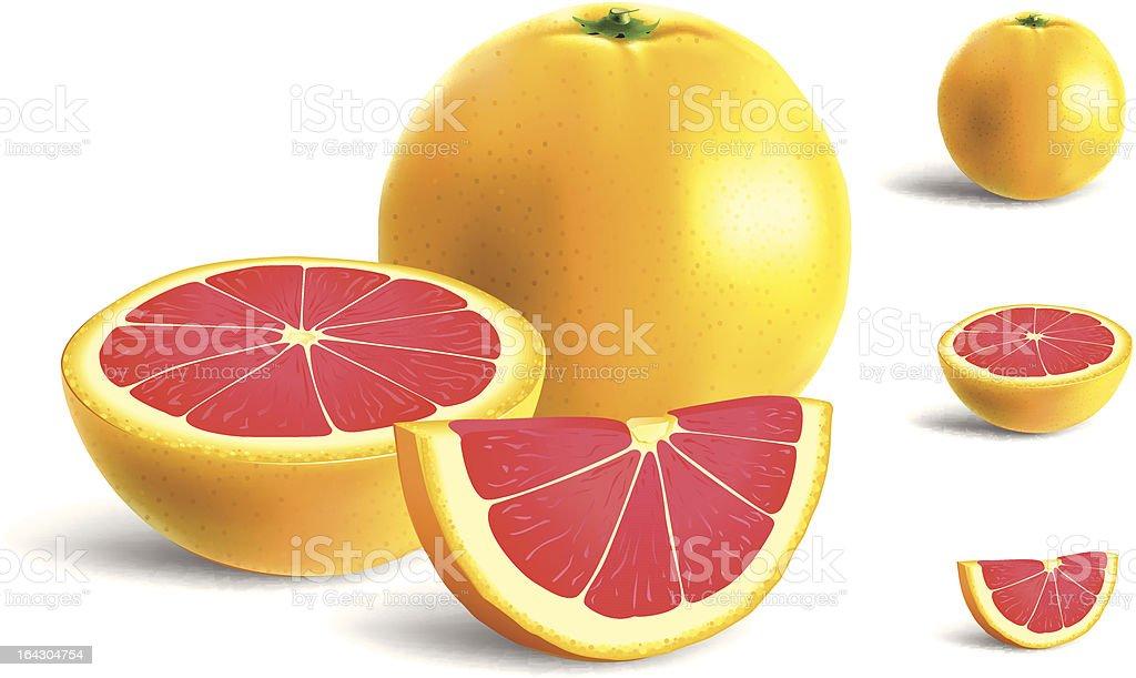 Grapefruit royalty-free stock vector art