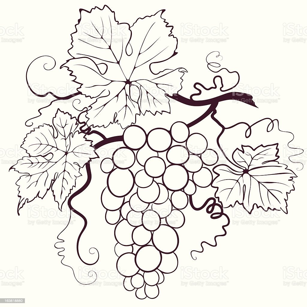 Grapes With Leaves vector art illustration