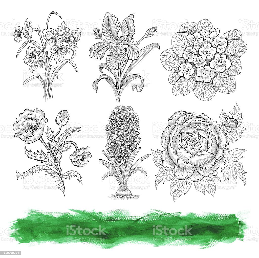 Graphic collection with vintage engraved flowers isolated on white stock photo