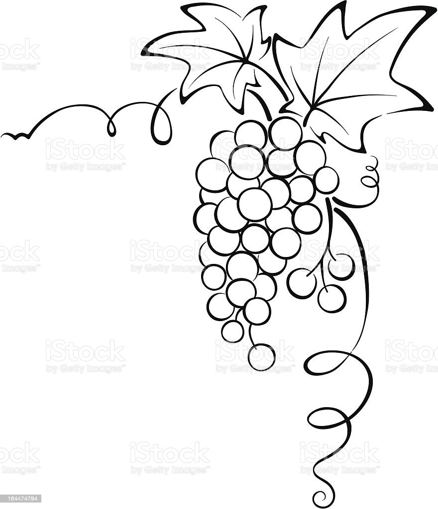 Graphic design - Grapevine royalty-free stock vector art