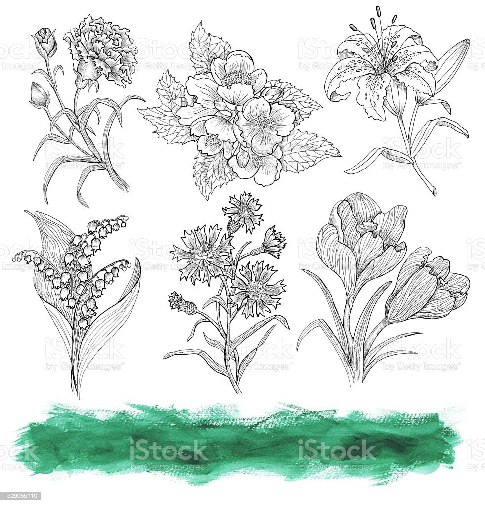 Graphic set with engraved flowers and green texture isolated stock photo