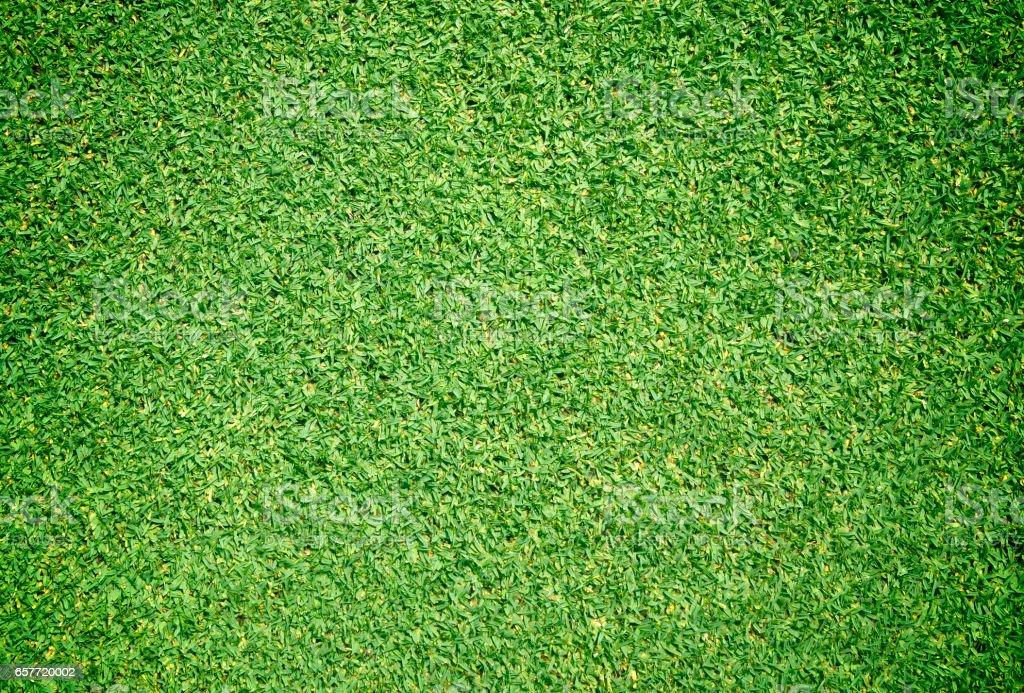 Grass green background vector art illustration
