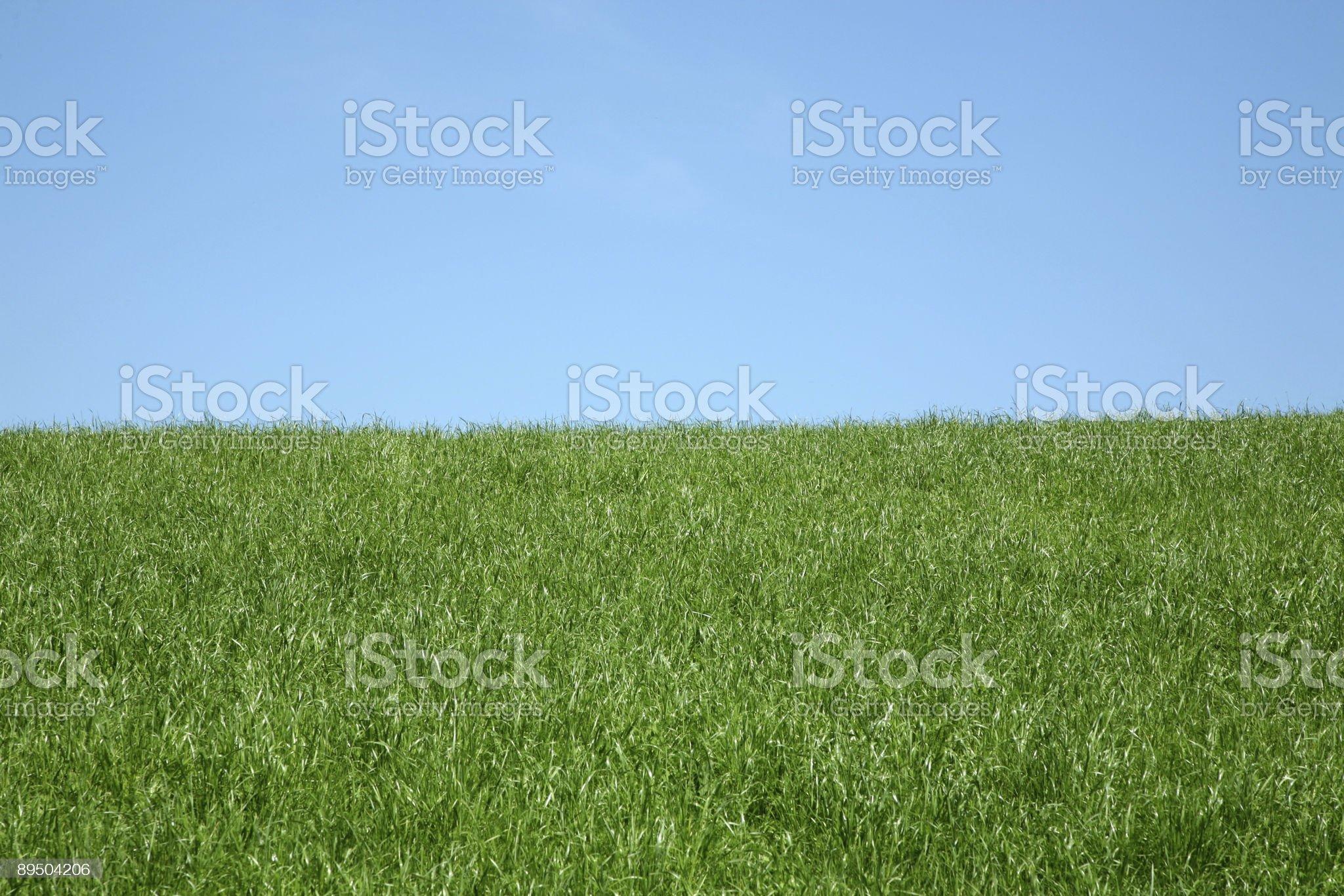 grass royalty-free stock vector art