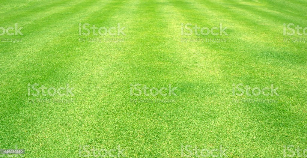 grass pattern textured background. vector art illustration