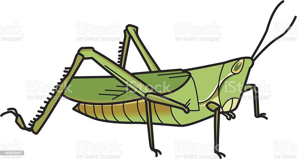 バッタ grasshopper royalty-free stock vector art