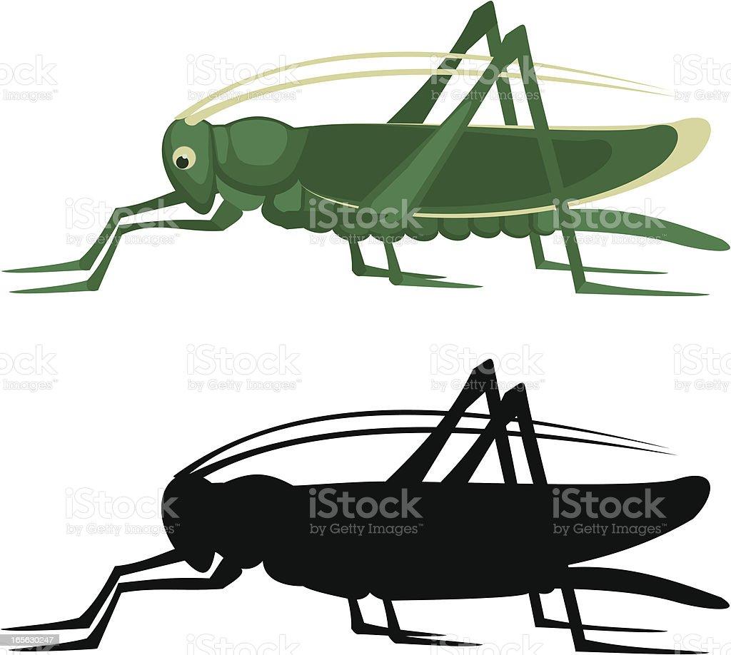 grasshopper vector art illustration