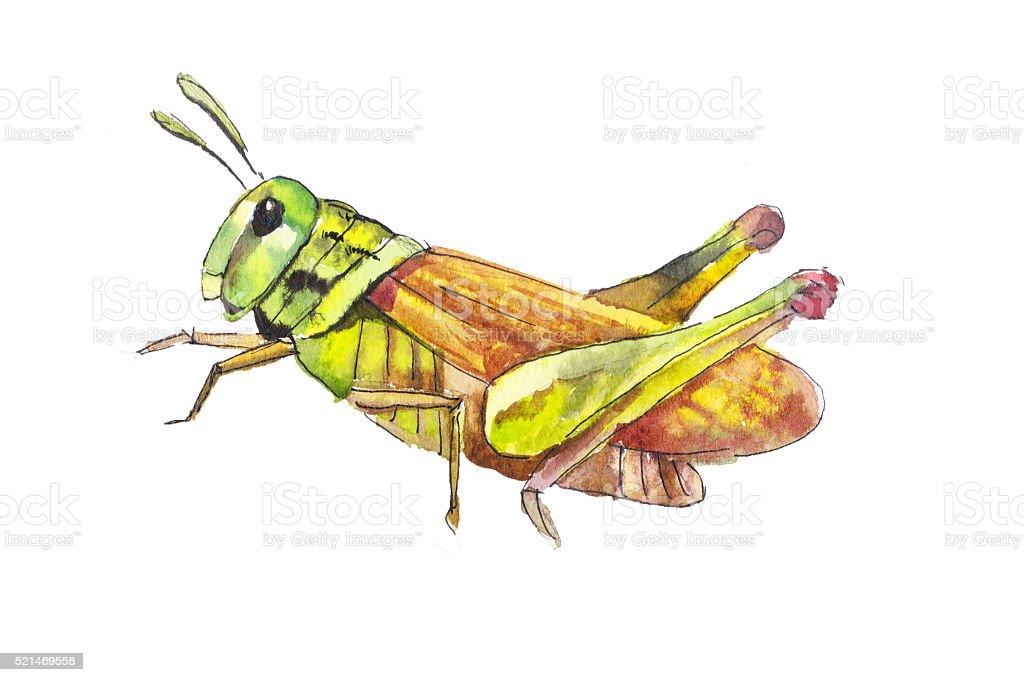 Grasshoppers hand drawn vector art illustration