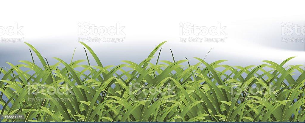 Grassy field vector art illustration