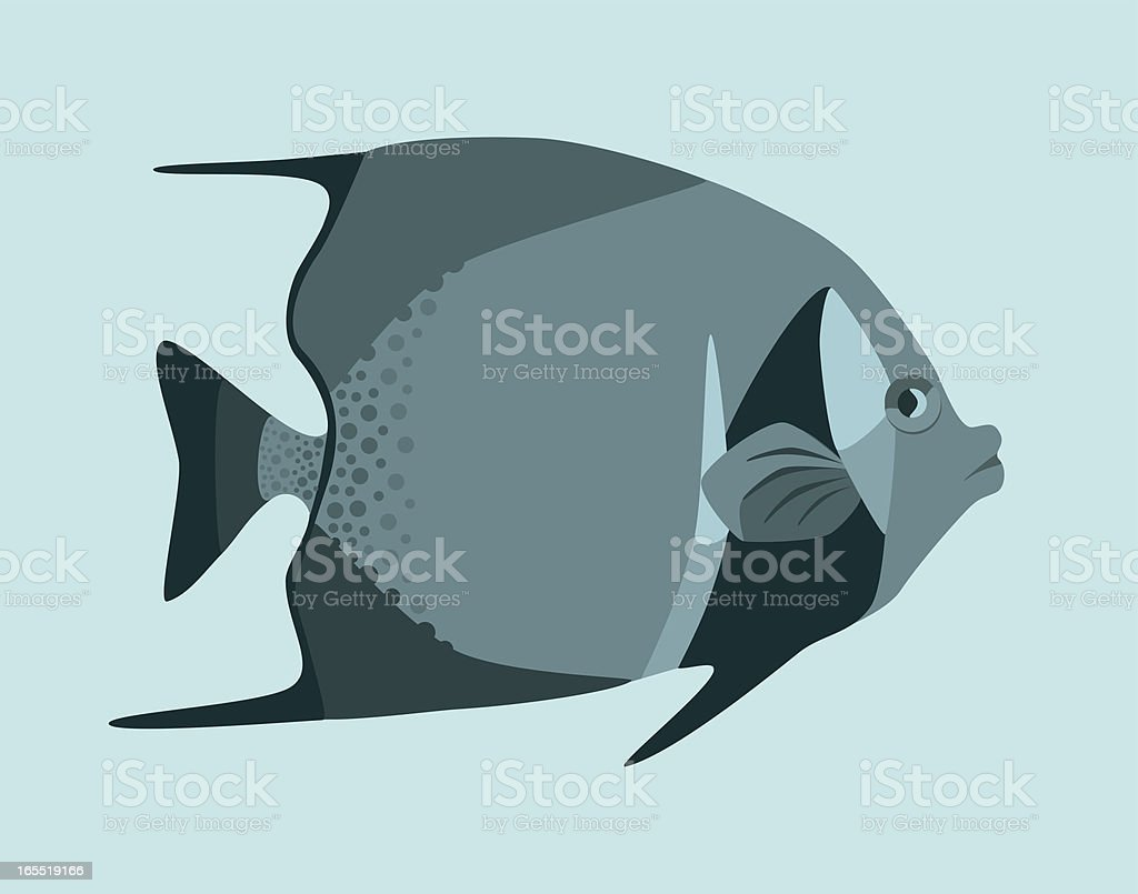 Gray angelfish vector art illustration