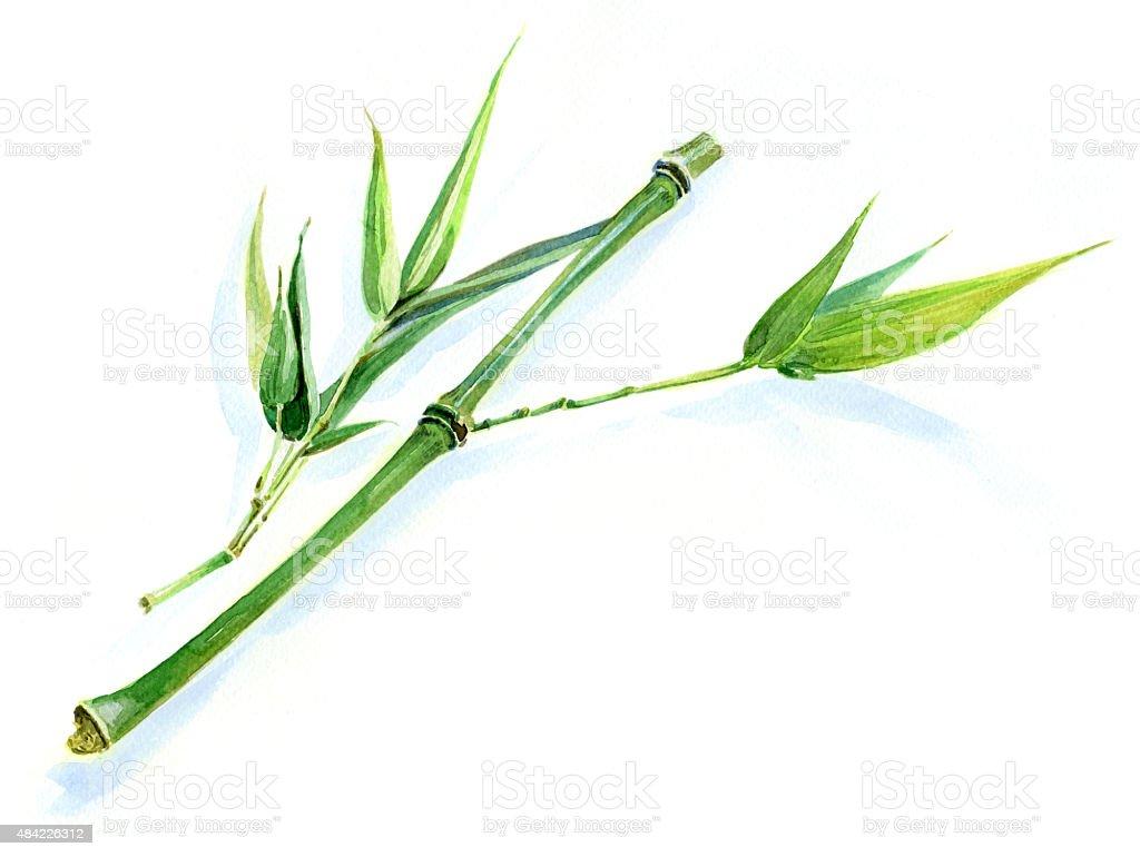 Green bamboo sprig vector art illustration