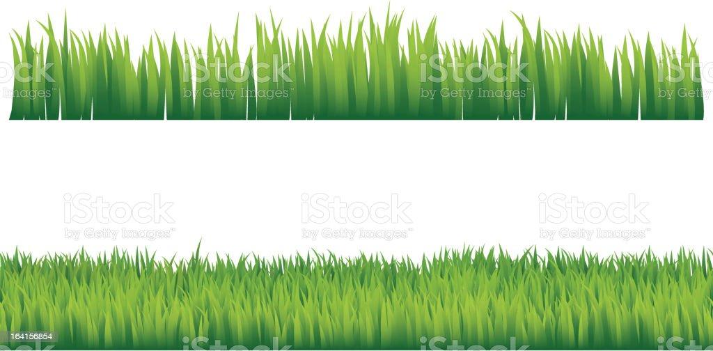 Green grass vector art illustration