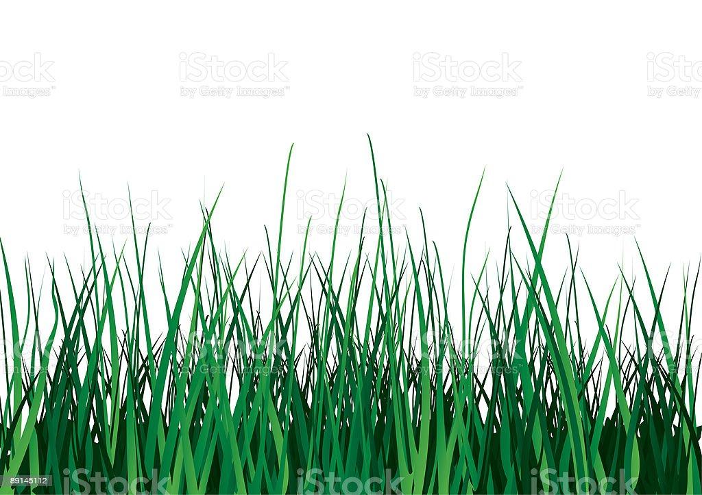 Green grass on white background. vector art illustration