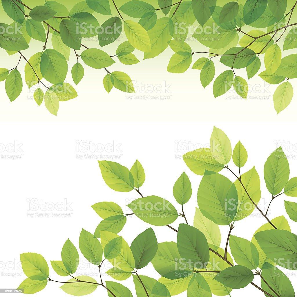 Green leaves background vector art illustration