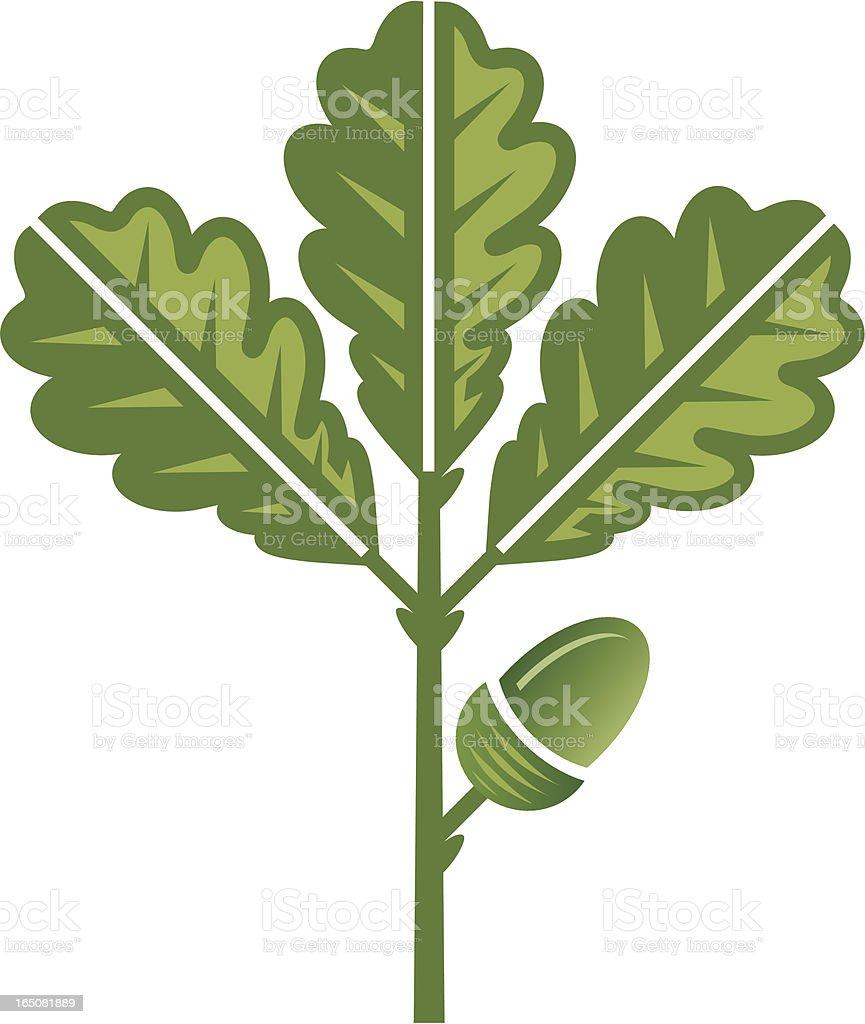 Green oak leaf and acorn royalty-free stock vector art
