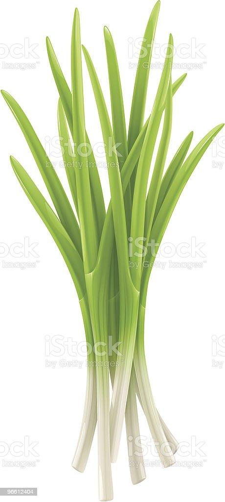 Green onion vector art illustration