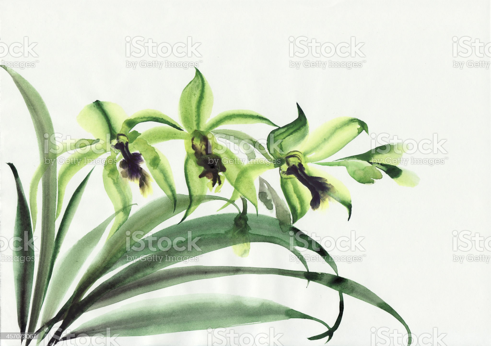 Green orchids royalty-free stock vector art