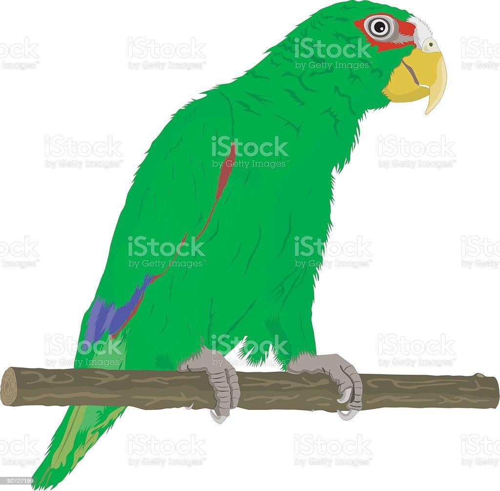 Green Parrot (Vector) royalty-free stock vector art