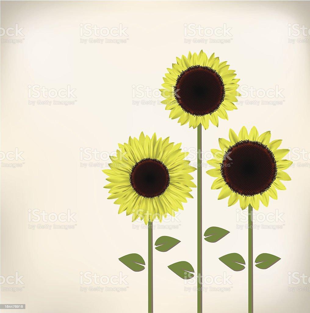 green sunflower royalty-free stock vector art