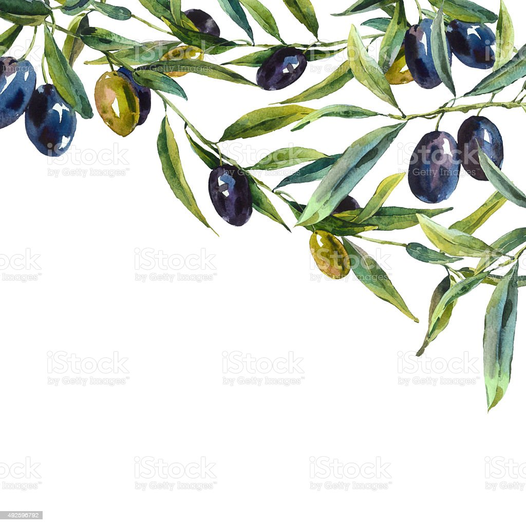Greeting card with branches of olive tree vector art illustration