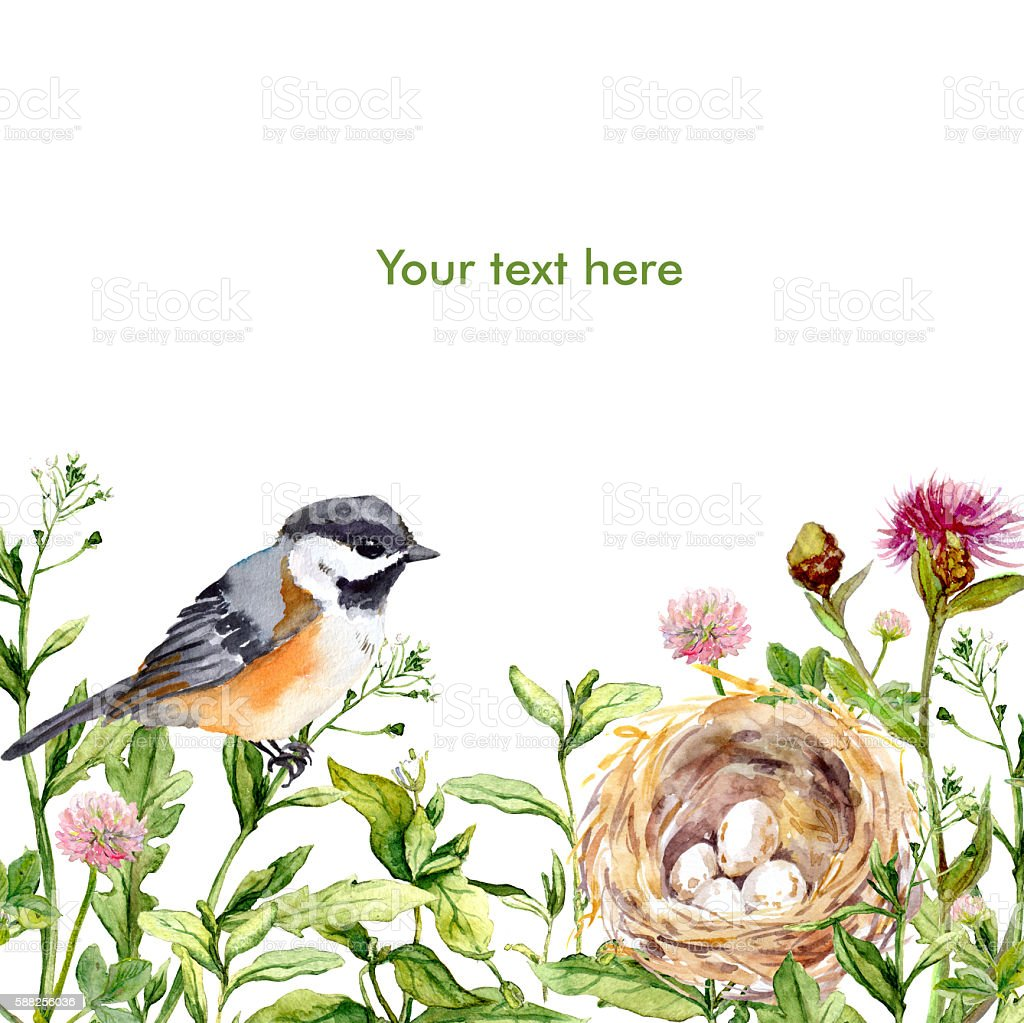 Greeting card with wild herbs, bird and nest. Watercolor vector art illustration