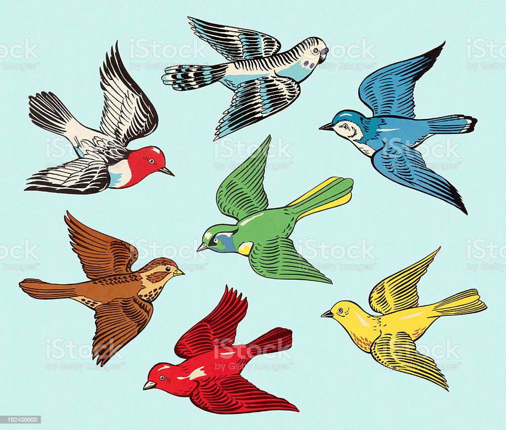 Group of Colorful Birds vector art illustration