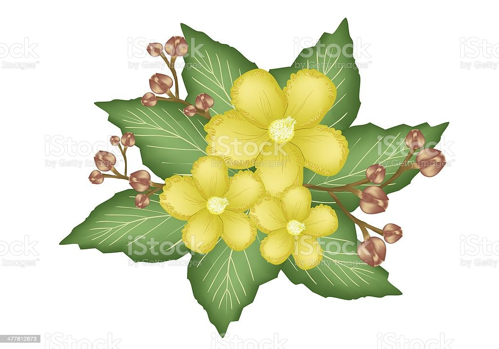 Group of Fresh Yellow Simpor Flowers vector art illustration