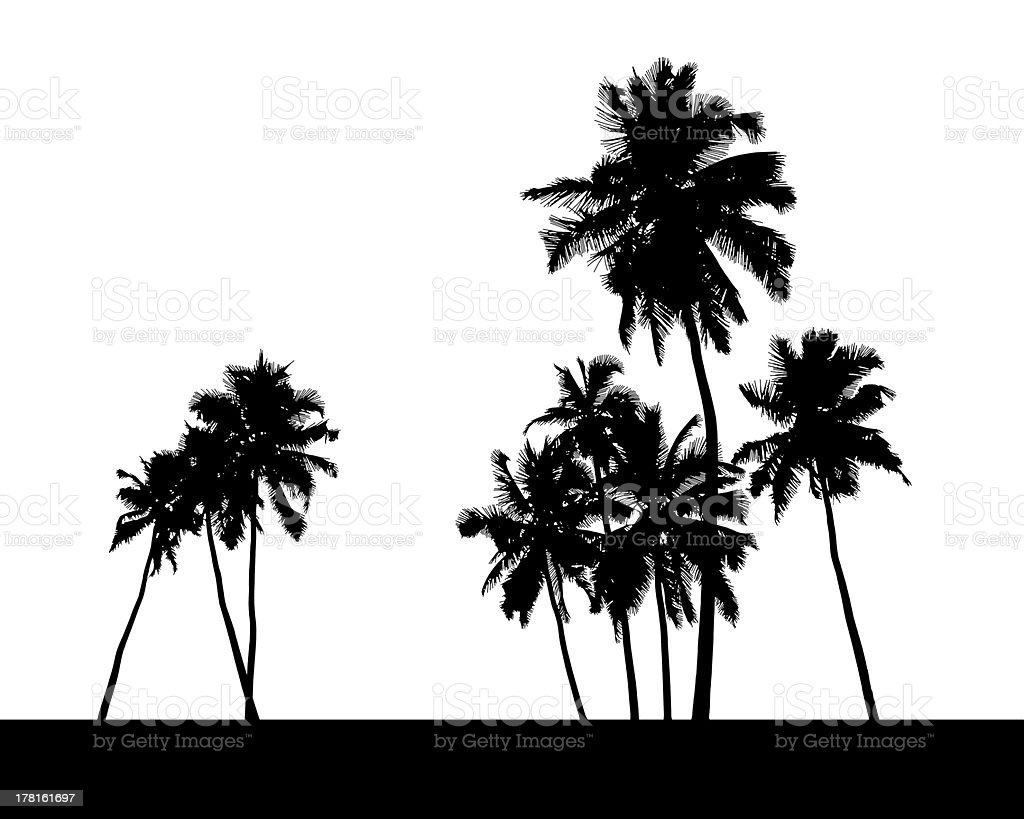 group of palm trees silhouette vector art illustration