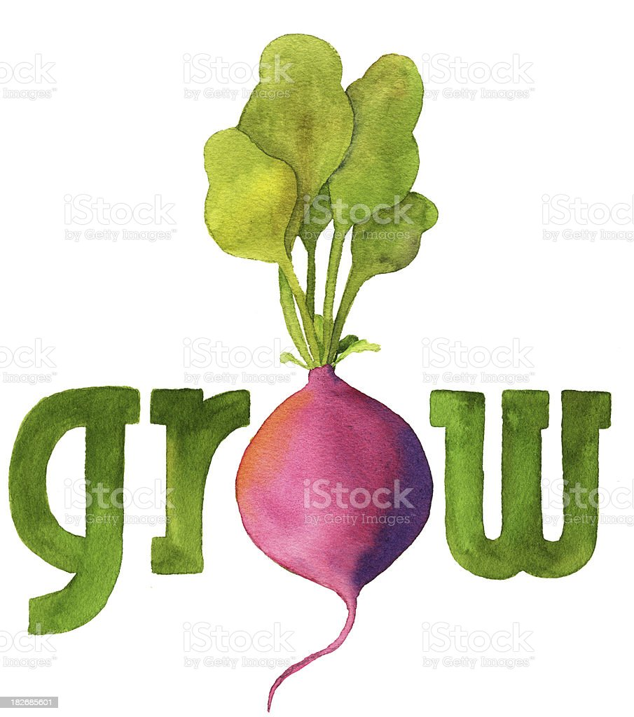 Grow with Radish royalty-free stock vector art