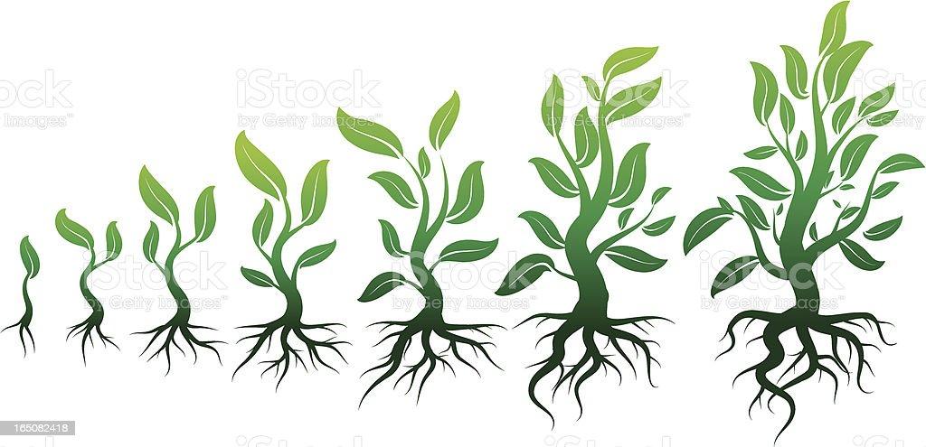growing leafs vector art illustration