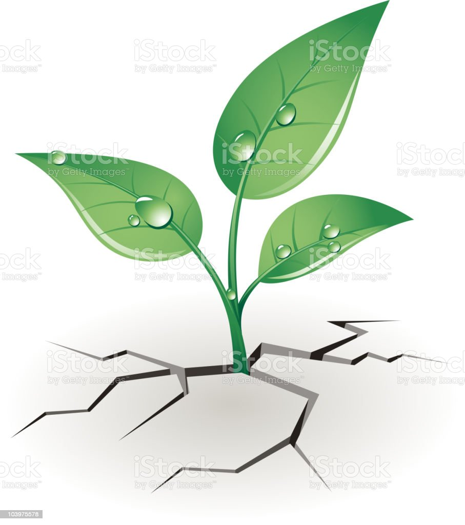 Growth sprout vector art illustration