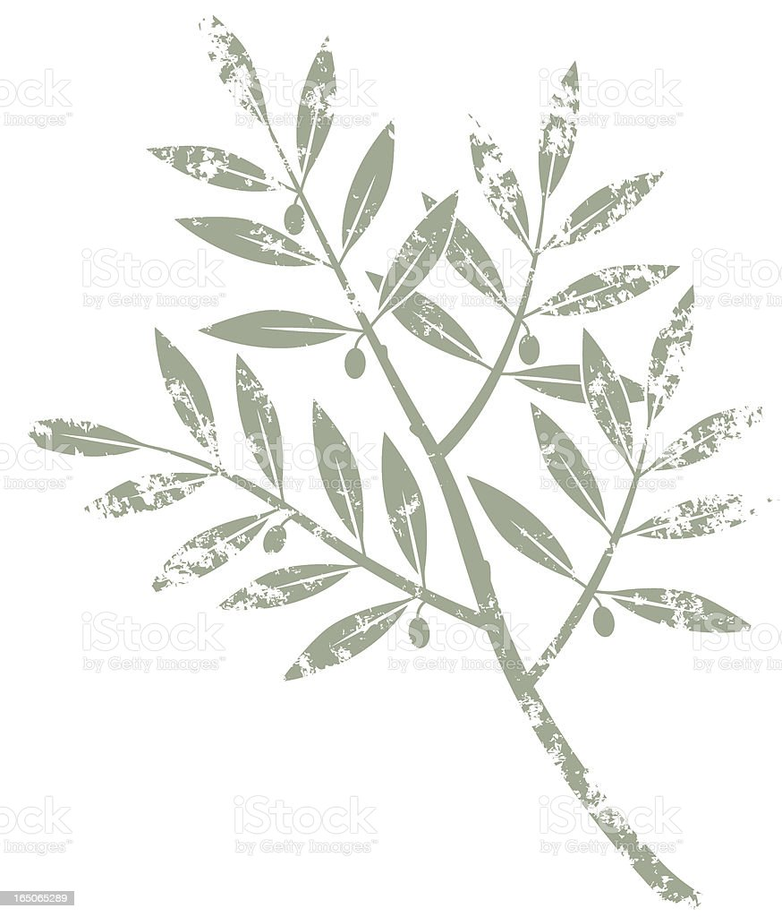 Grunge olive branch royalty-free stock vector art