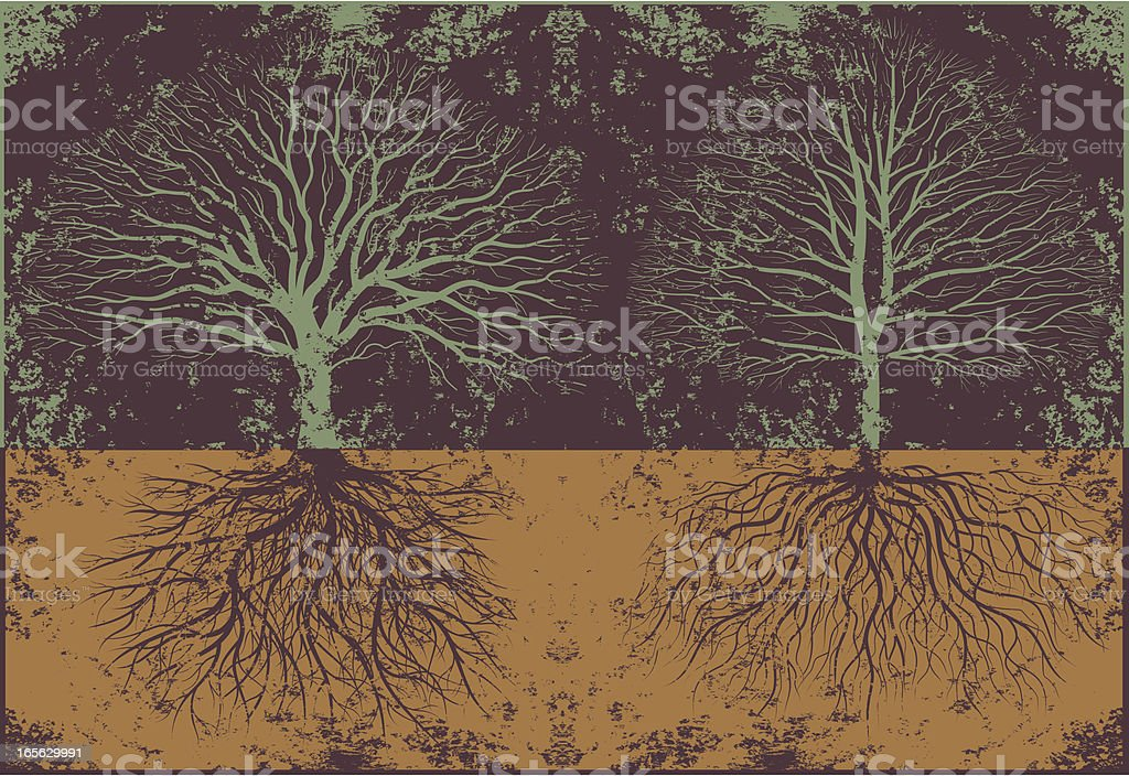 Grunge real tree roots royalty-free stock vector art
