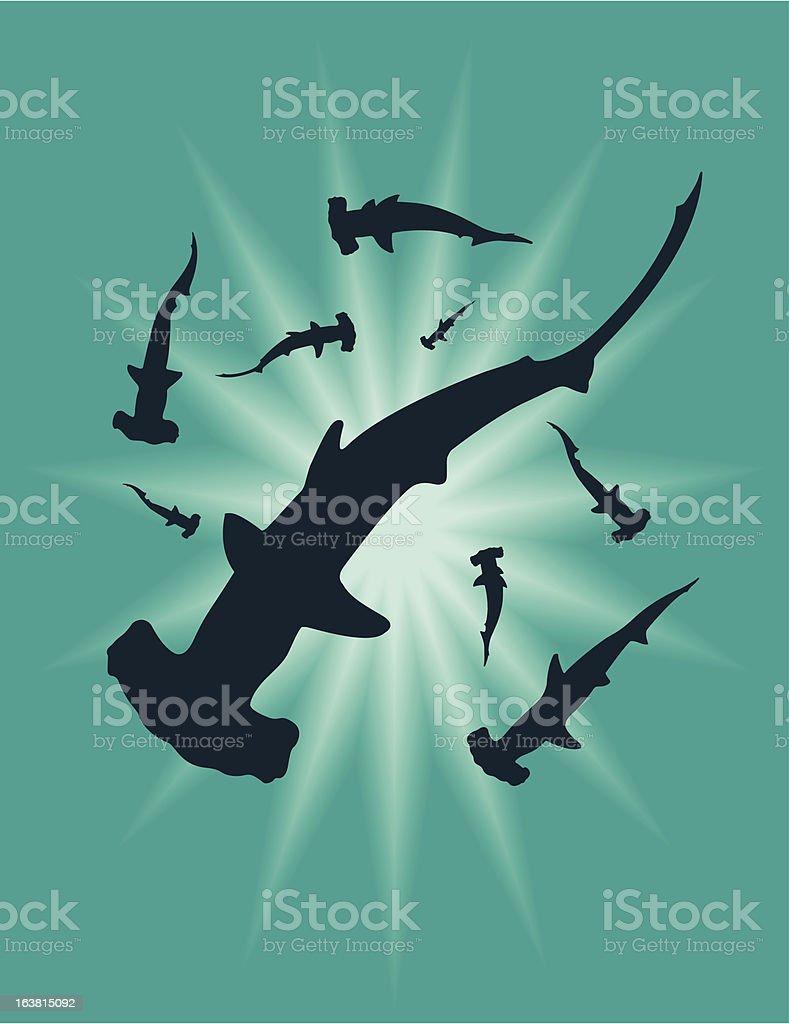 Hammer Head Sharks royalty-free stock vector art