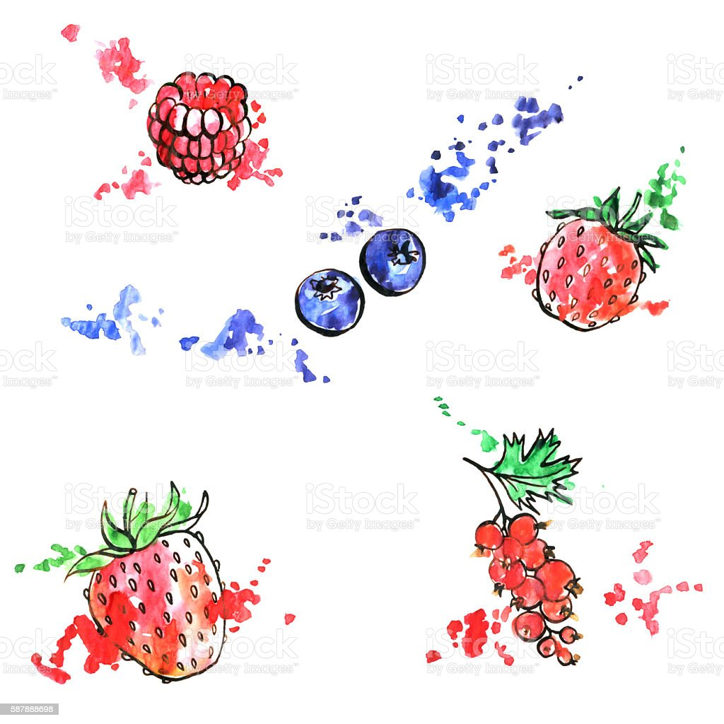 hand drawn berries vector art illustration