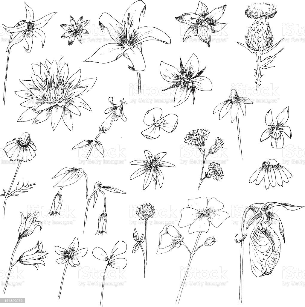 Hand Drawn Flowers vector art illustration