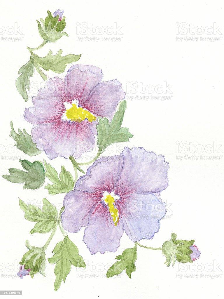 hand gezeichnet Blumen-Buschmalve Lizenzfreies vektor illustration