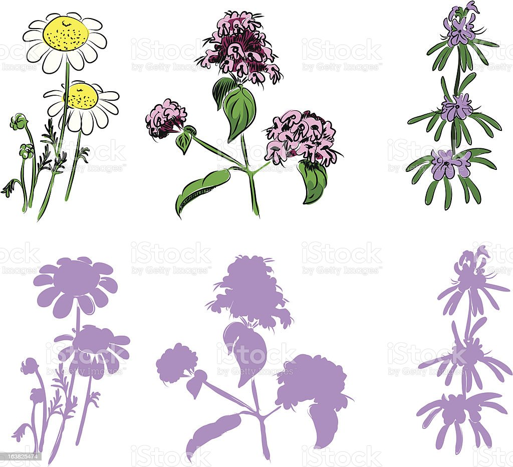 hand drawn herbs royalty-free stock vector art