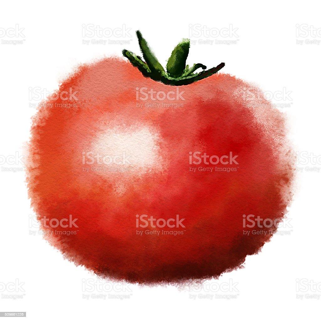 Hand drawn image of tomato vector art illustration