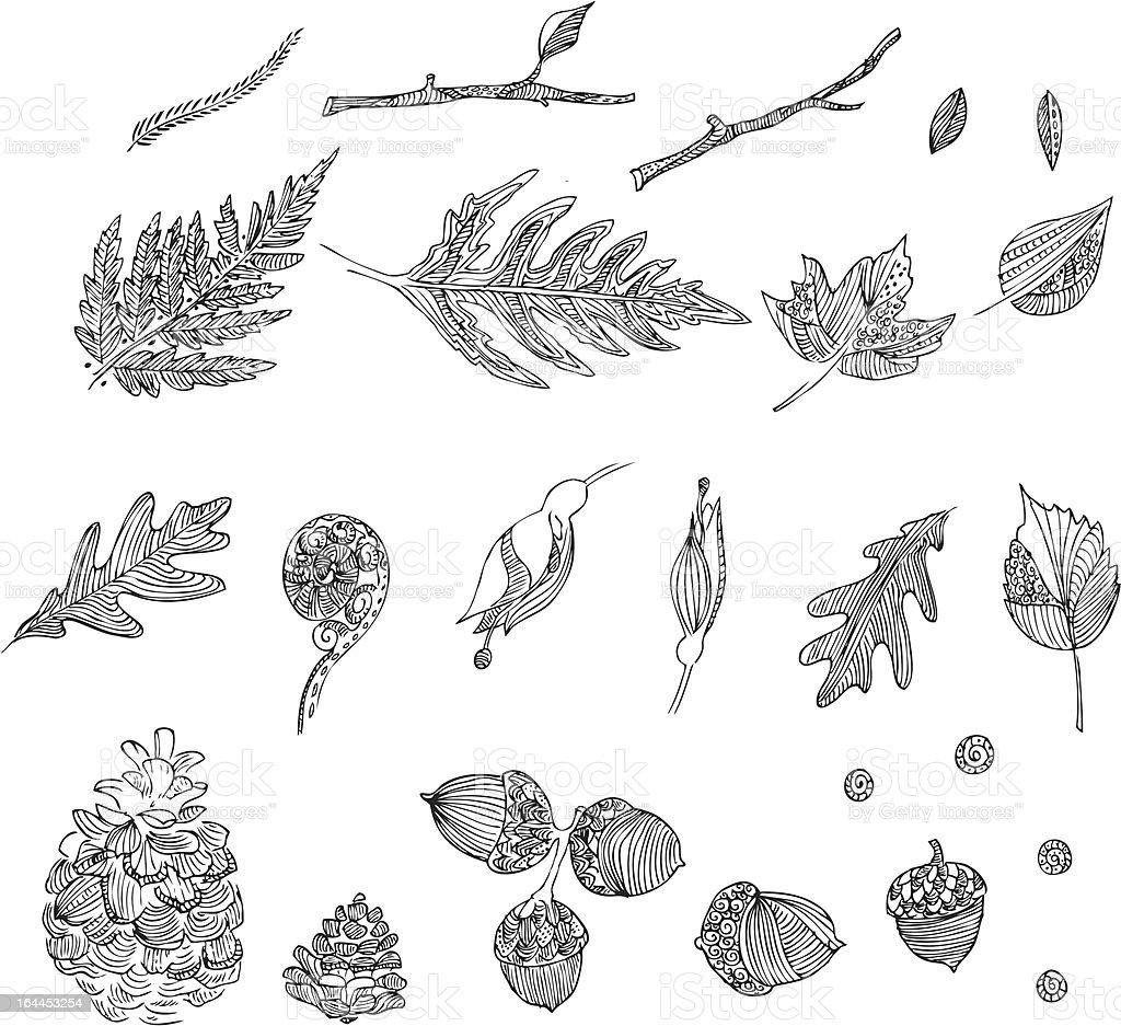 Hand drawn intricate autumn designs vector art illustration
