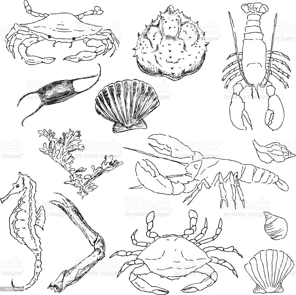 Hand drawn items from the ocean royalty-free stock vector art
