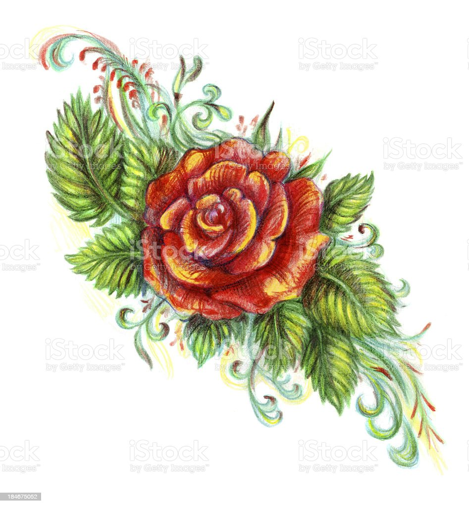 Hand drawn rose on white background royalty-free stock vector art