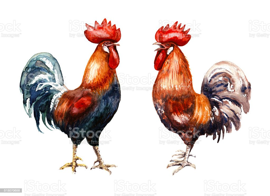 Hand drawn two red roosters vector art illustration