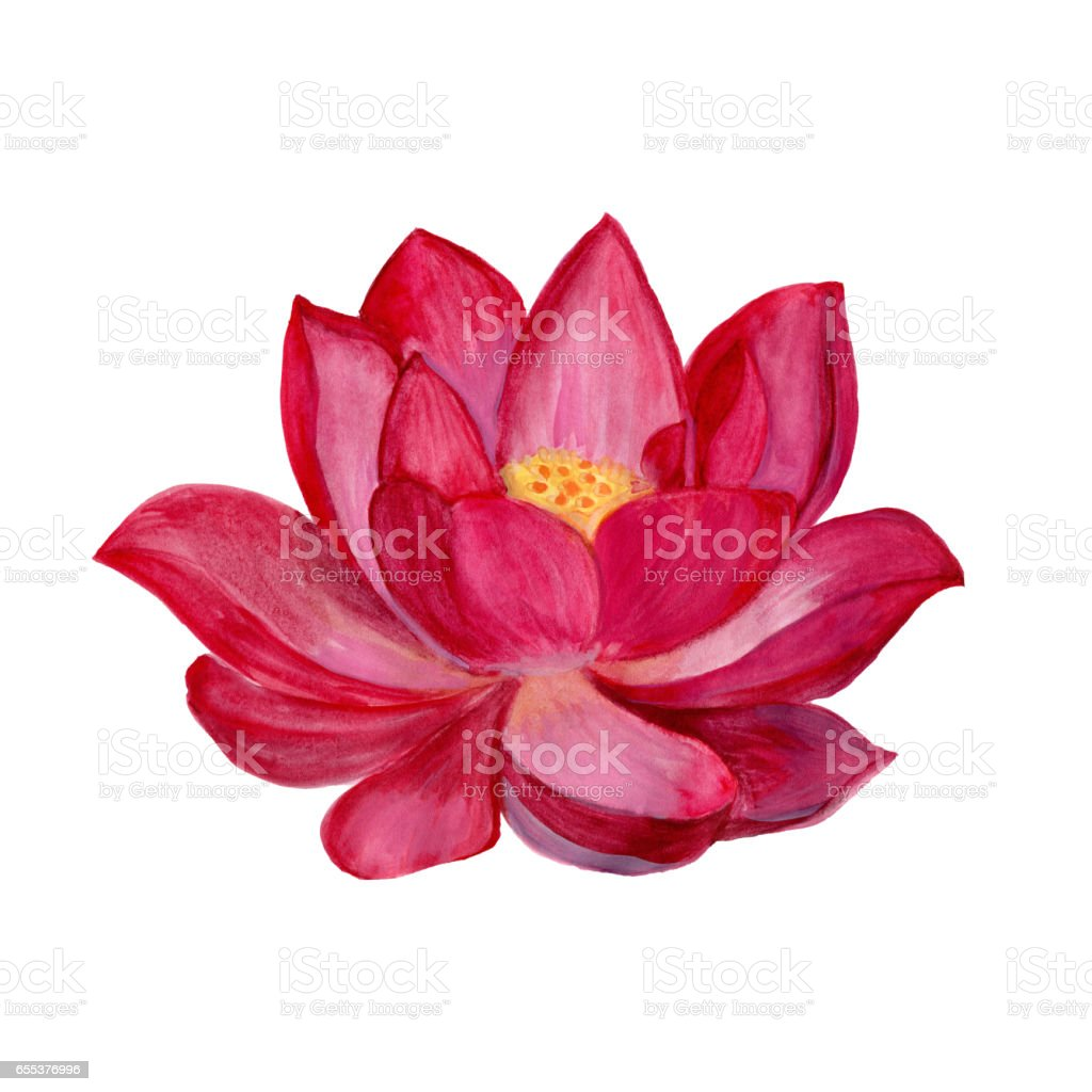 Hand drawn watercolor botanical illustration of lotus flower pink hand drawn watercolor botanical illustration of lotus flower pink royalty free stock vector art dhlflorist Images