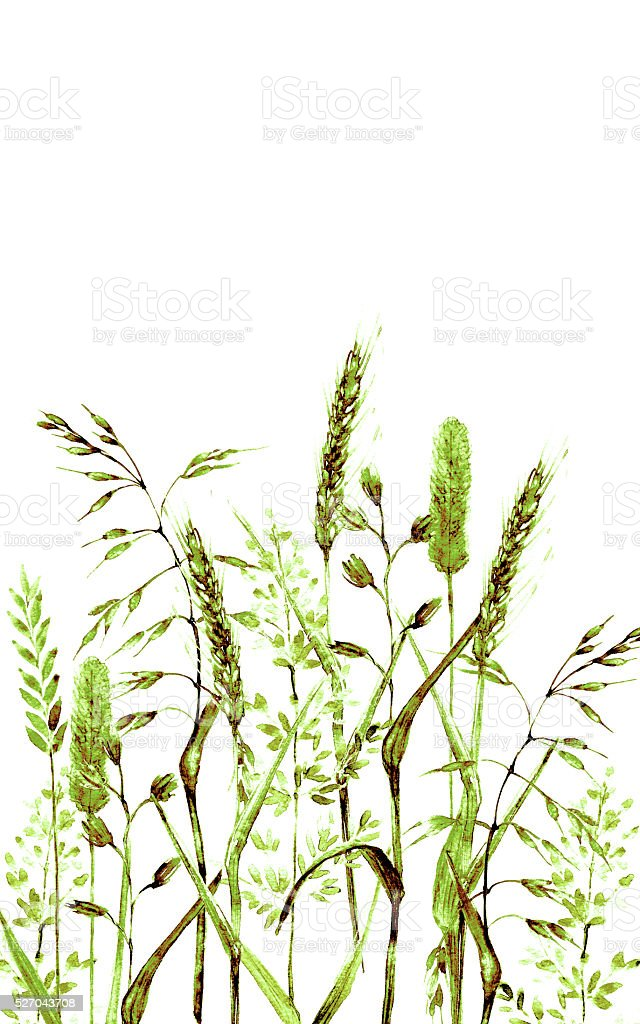 Hand drwan watercolor meadow grass vertical background vector art illustration