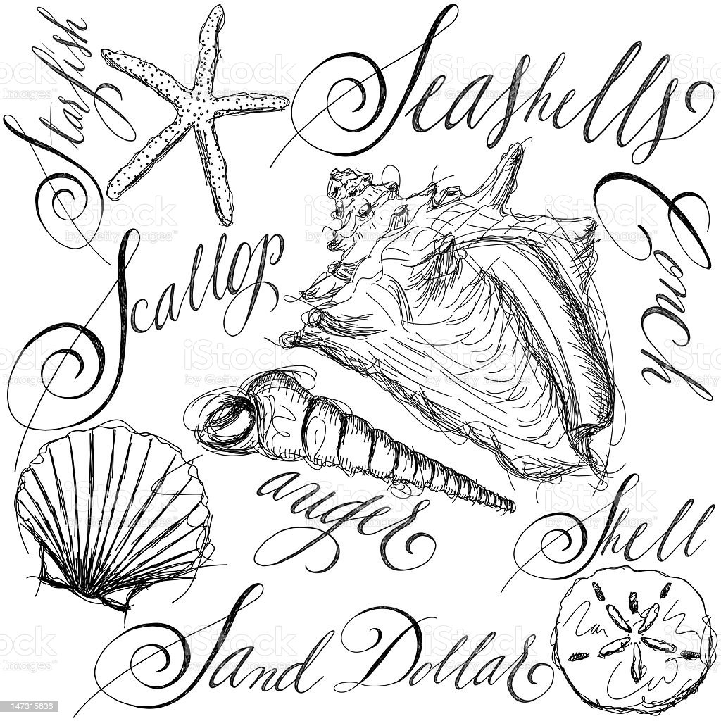 Hand sketched seashells with names in calligraphy vector art illustration