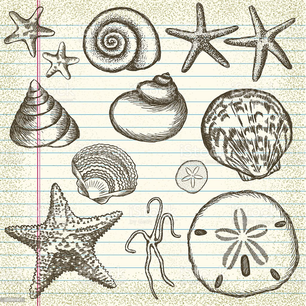 Hand-Drawn Set of Sea Shells on Old Paper vector art illustration
