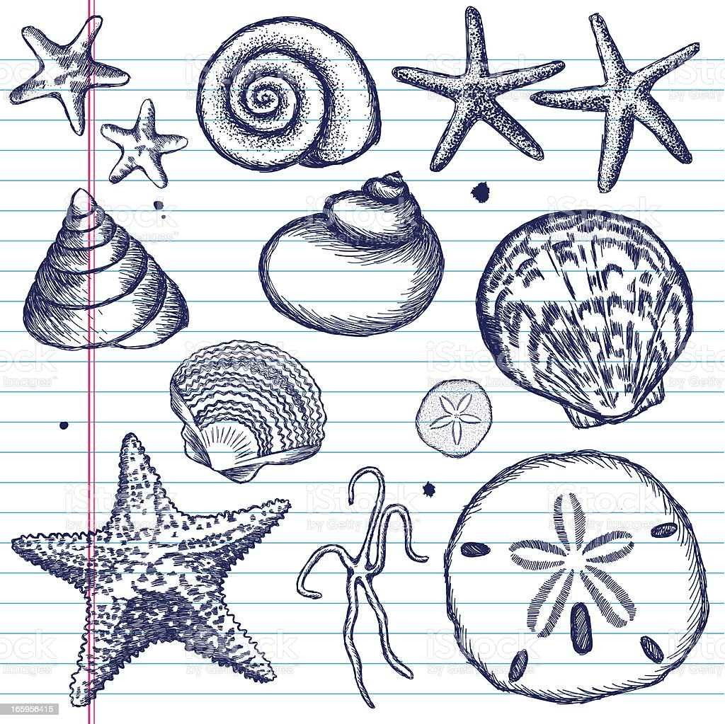 Hand-Drawn Set of Sea Shells on Paper vector art illustration